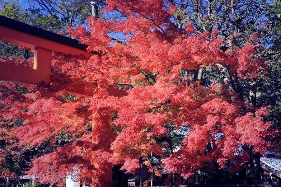 WORLD PEACE LOVE | 「下鴨神社」と「茶寮 宝泉」